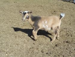 goats feb 9 2012 009.JPG?1328839772254